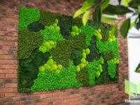 стабилизированный мох вертикальное озеленение